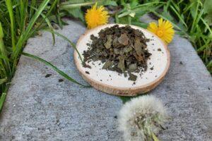 Herbata utleniana z młodych liści brzozy