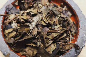 Herbata utleniana z młodych liści dzikiej wiśni